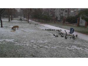 İstanbul'da kar etkili oluyor
