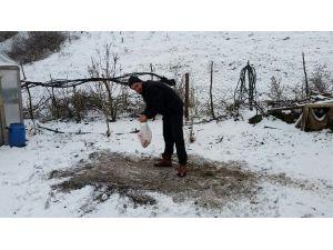 Karda Aç Kalan Kuşlara Köy İmamı Yem Bıraktı