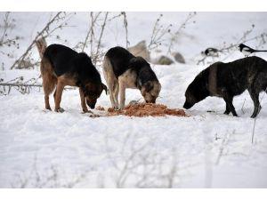 Mamak Belediyesi Doğadaki Hayvanları Unutmadı