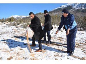 Amanos Dağı'na yem bırakıldı