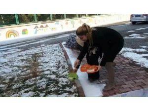Iğdır'da aç kalan kuşlar için yem bırakıldı