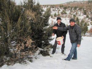 Hisarcık'ta Kuşlar İçin Doğaya Yem Bırakıldı