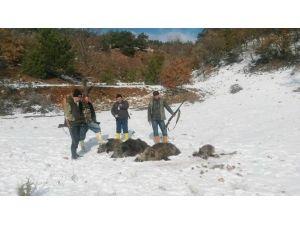 Avcılar 3 Saatte 5 Yaban Domuzu Vurdu