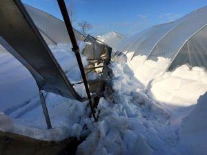 Kar Yağışı Seralara Büyük Zarar Verdi