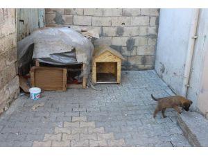 Mahalle Sakinleri Sokak Hayvanlarına Bakıyor