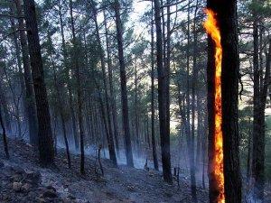 Tazmanya'da dünya mirası ormanlar yanıyor