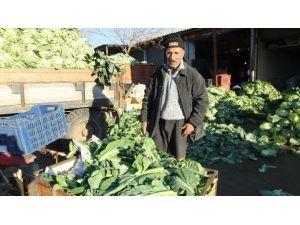 Burhaniye'de Karnabahar Bollaşınca Fiyatları Düştü