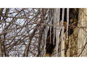 Iğdır'da ağaçlar buz tuttu