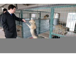 Aksaray'da Sokak Hayvanlarına Beş Yıldızlı Bakım