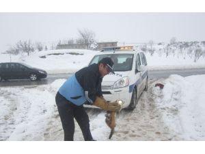 Körfez Zabıtası Sokak Hayvanlarına Sahip Çıkıyor
