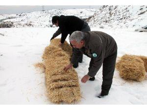 Yaban Keçileri İçin Saman Ve Yem Bırakıldı