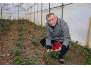 Süs Bitkisi Seralarında Kar Zararı