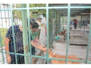 Ev ve süs hayvanlarını satıcılarına kurs düzenlenecek