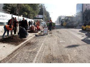 Şanlıurfa Büyükşehir Belediyesi Kestiği Ağaçların Yerine Yenilerini Dikti