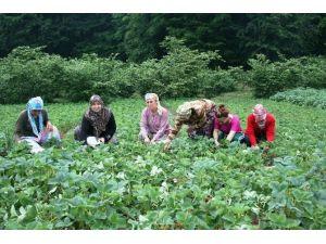 Bartınlı Çiftçiye 2016 Yılında 16 Milyon TL Destekleme