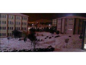 Aç Kalan Domuz Sürüsü Üniversite Kampüsüne İndi