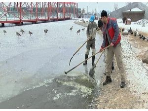 Hayvanat Bahçesindeki Göl Buz Tuttu