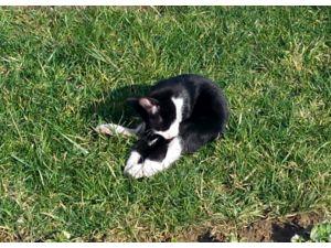 Sevimli kedinin sıcak hava mutluluğu