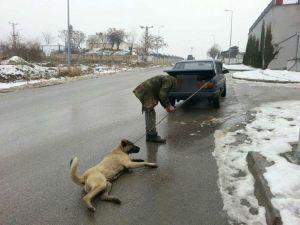 Otomobilinin Arkasına Bağladığı Köpeğini Sokak Sokak Sürükledi