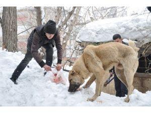 Muş'ta Çoban Köpeğini Kurtarma Operasyonu