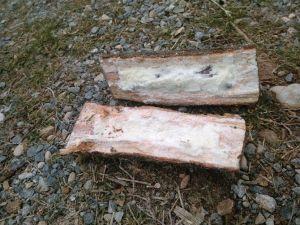Odunlu Bomba Tuzağında Soruşturma Sürüyor