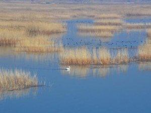 Tepeli pelikana zarar vermenin cezası 200 bin lira