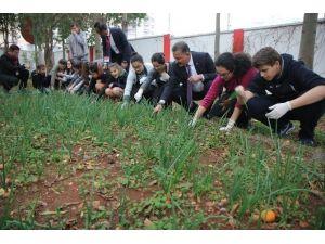 Başkan Tuna, Öğrencilerle Diktiği Sebzelerden Topladı