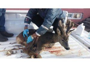 Yaralı Karacaya Polis Şefkati