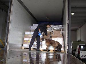 Narkotik Köpeği Donna Sarp'ta Kaçakçılara Geçit Vermiyor