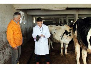 Kocaeli'de Hayvancılık Sektörü Yüzde 60 Büyüdü