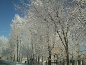 Özalp İlçesinde Dondurucu Soğuklar