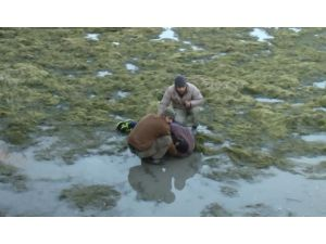 Alkollüyken sulama kanalına düşen adam 1 gün sonra bulundu
