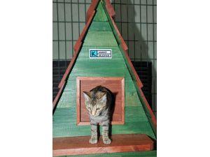 Kadıköy'de kediler üşümeyecek
