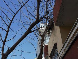 Ağaçta Mahsur Kalan Adamı İtfaiye Ekibi Kurtardı