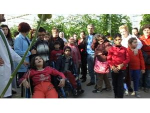 Burhaniye'de Engelli Çocuklar Sera İle Tanıştı