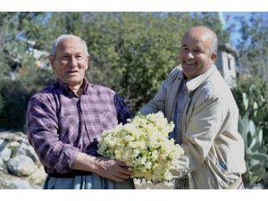 Büyükşehir'in Dağıttığı Nergis Soğanları İlk Çiçeklerini Açtı