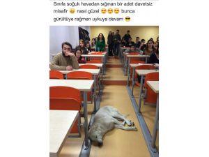 Sınıfta uyuyan köpeğin akıbeti için suç duyurusu