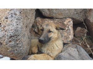 İtfaiyeden 'Yaralı Köpek' Seferberliği