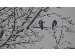 Bitlis'te beklenen kar yağışı başladı