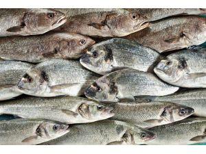 Dünya Tanıtımlar Sayesinde Türk Balıklarını Tüketiyor