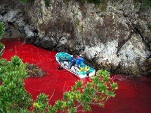 Balina Katliamının Rengi, Kan Kırmızısı ve Dolar Yeşili