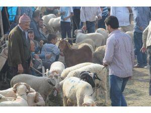 Şap Salgını Sona Erdi, İnegöl Hayvan Pazarı Açılıyor