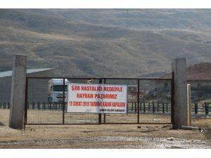 Hayvan pazarı şap hastalığı nedeniyle kapatıldı