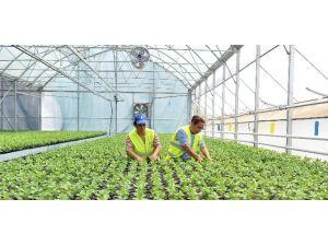 Muratpaşa Belediyesi 30 Bin Çiçek Fidesi Dağıtacak