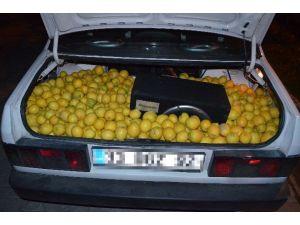 Fiyatı Fırlayan Limona Hırsızlar Dadandı