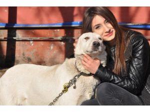 Sokak Hayvanlarına Şefkatli El