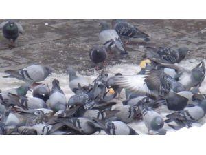 Duyarlı Vatandaşlardan Kuşlara Yem