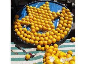 Limonlarla Ay-yıldız Yaptı