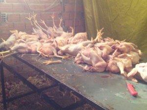 İzmir'de Mide Bulandıran Tavuk Operasyonu! Suçüstü Yakalandılar