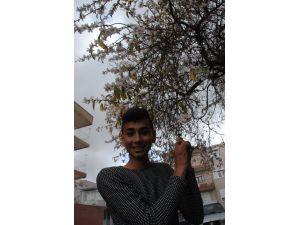 Manavgat'ta badem ağaçları çiçek açtı